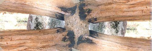 Giant_Redwood,Ca_2_HORIZ